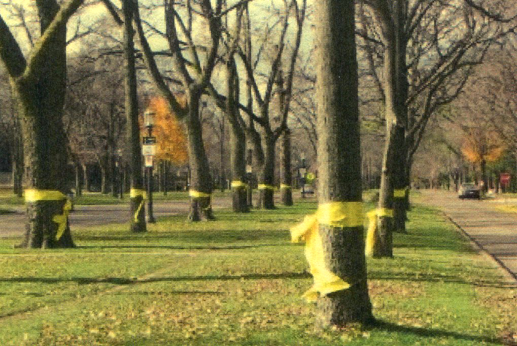Yellow ribbons tied to trees on West Blvd, Rapid City, SD  1981